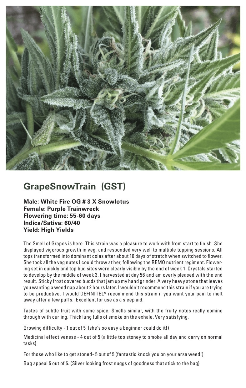 Grape Snow Train (Purple Trainwreck x (White Fire OG # 3 X Snowlotus)) 12 Regular Seeds