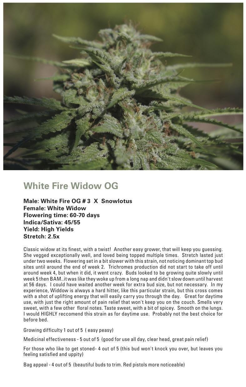 White Fire Widow OG (White Widow x (White Fire OG # 3 X Snowlotus)) 12 Regular Seeds