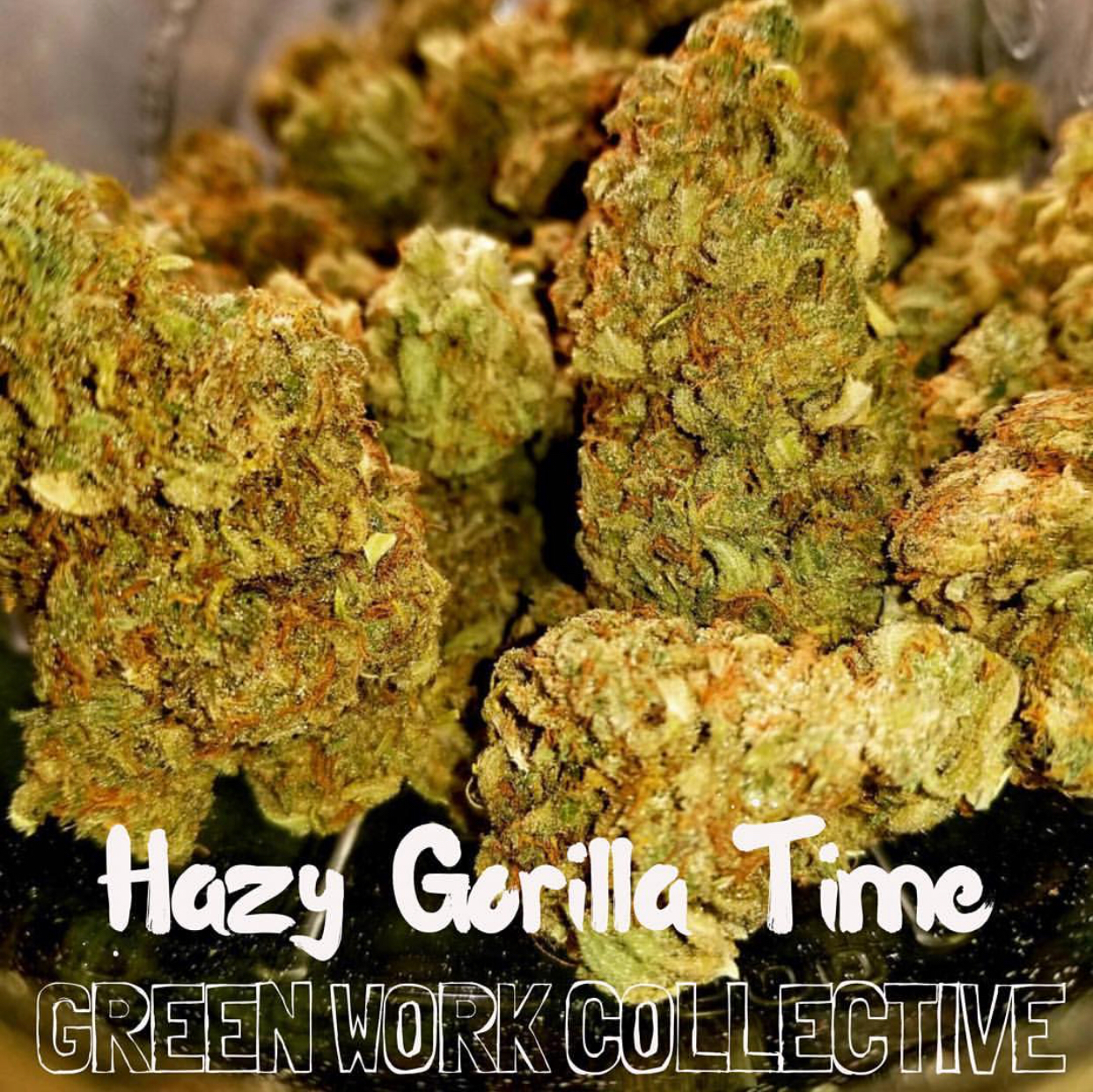 Hazy Gorilla Time ((Gorilla Glue #4 x Clockwork Orange) x Malawi) 7 Regular Seeds